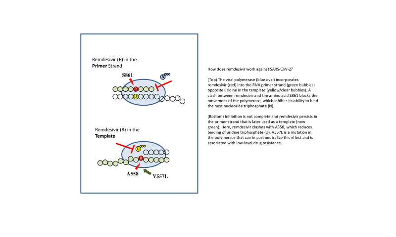 UofA lab uncovers new mechanism of action against SARS-CoV-2 by antiviral drug remdesivir