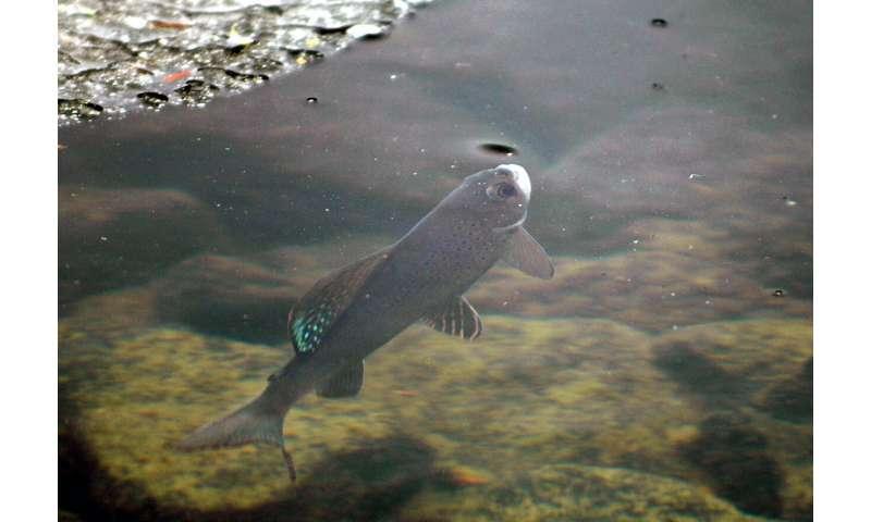 Agencia de vida silvestre de EE. UU. Rechaza protecciones para especies de peces raros