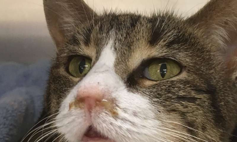 Welfare concerns highlighted over 'institutional hoarding' of cats
