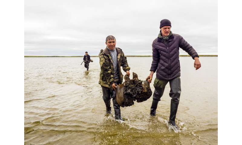 Well-preserved mammoth skeleton found in Siberian lake