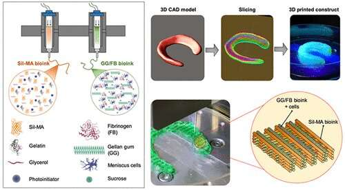 WFIRM scientists create the hybrid tissue structure to regenerate cartilage