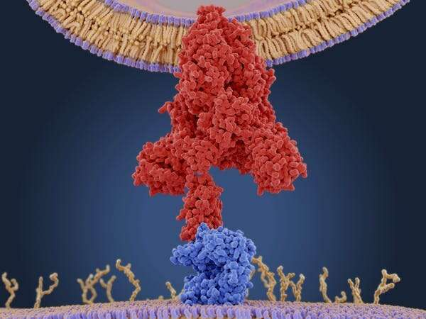 What does 'survival of the fittest' mean in the coronavirus pandemic? Look to the immune system