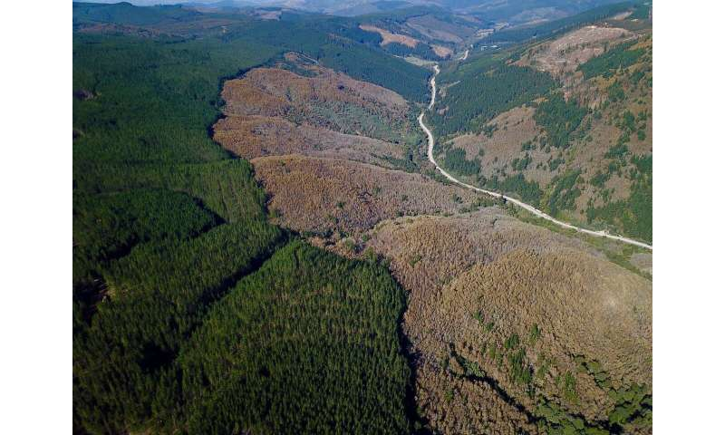 When planting trees threatens the forest
