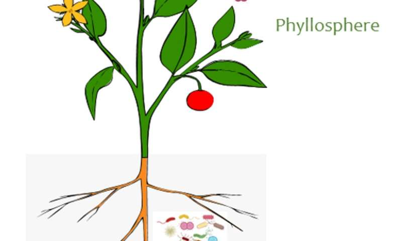 When plants and their microbes are not in sync, the results can be disastrous