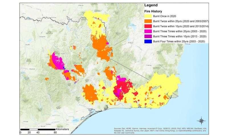 Why Australia's severe bushfires may be bad news for tree regeneration