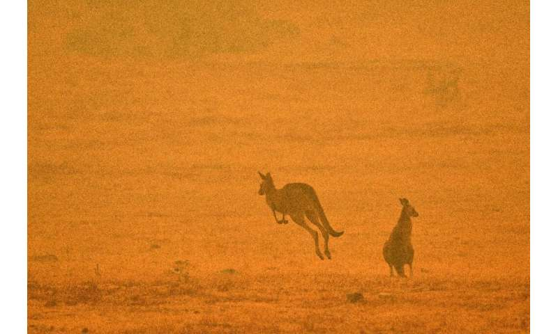 With temperatures expected to rise, a state of emergency has been declared across much of Australia's heavily populated southeas