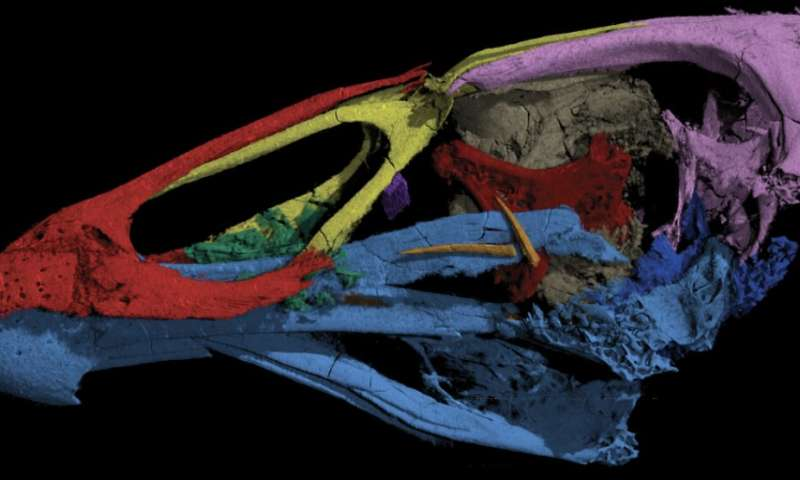'Wonderchicken' fossil from the age of dinosaurs reveals origin of modern birds