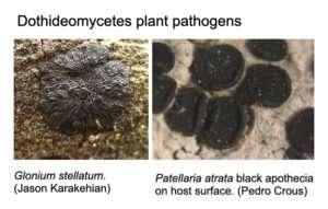 Computationally classifying fungal lifestyles