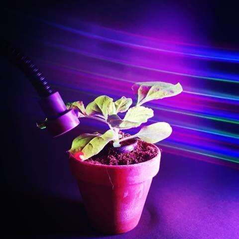 New research reveals plant control with the power of light