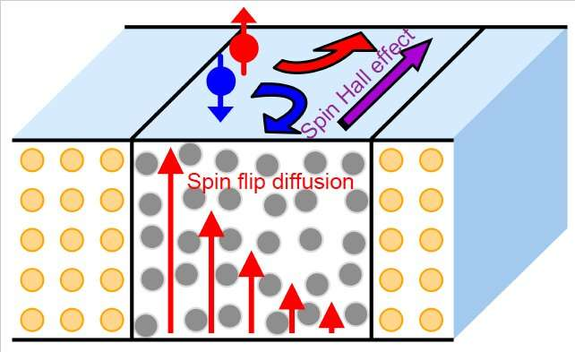 The study reveals the dependence of the loss of spin memory in various interfaces