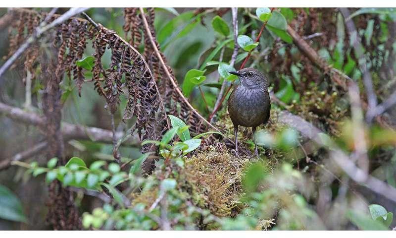 **10 new bird taxa discovered in islands of Wallacea