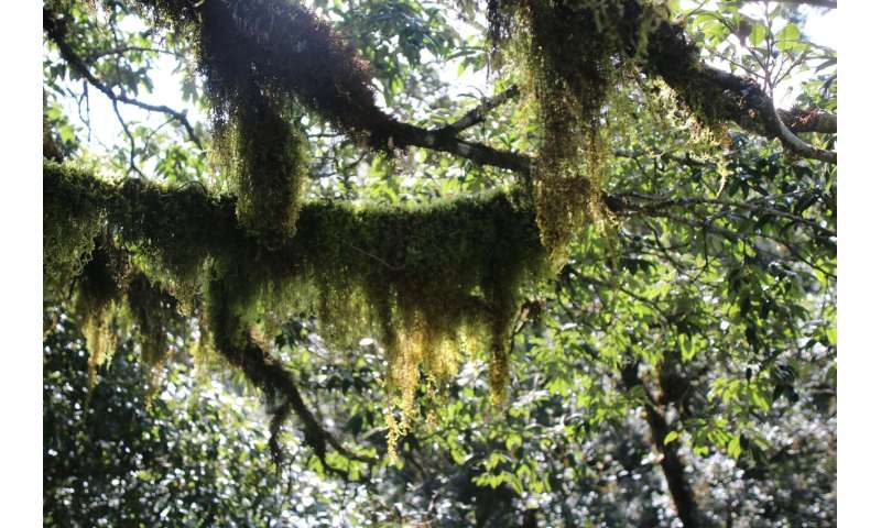 Environmental filtering structures functional strategies of bryophytes in cloud forest
