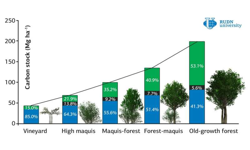 RUDN University ecologists found out how the age of a forest affects the accumulation of carbon in the soil