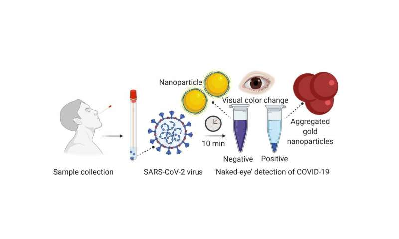 Researchers Develop Experimental Rapid Covid 19 Test Using Nanoparticle Technique