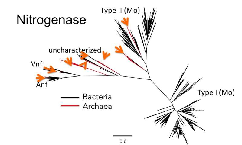 New study reveals life's earliest evolution was more complicated than previously suspected