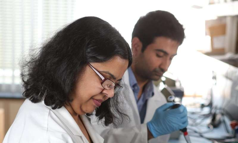 University of Toledo scientists discover new targets for preventing damage from viral infections