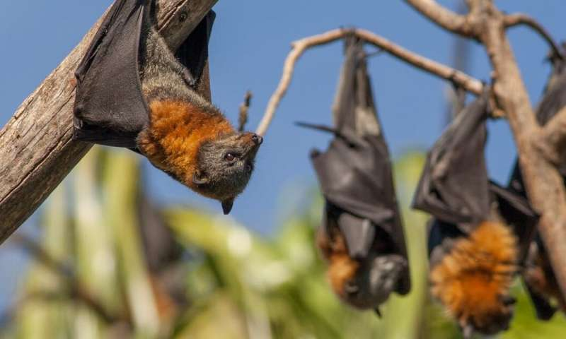 Coronavirus: three misconceptions about how wildlife transmit diseases debunked
