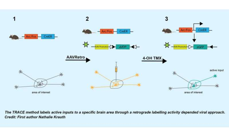 Development of a novel approach 'Tracing Retrogradely the Activated Cell Ensemble'