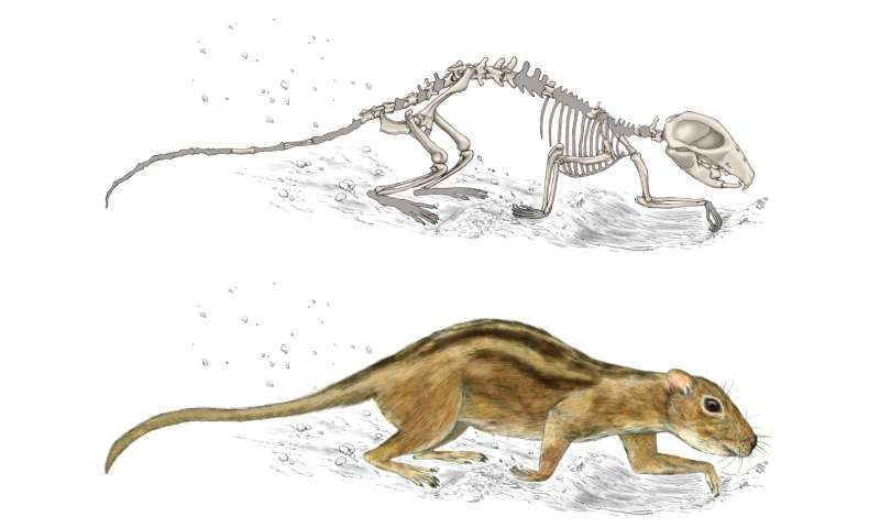 New study finds earliest evidence for mammal social behavior