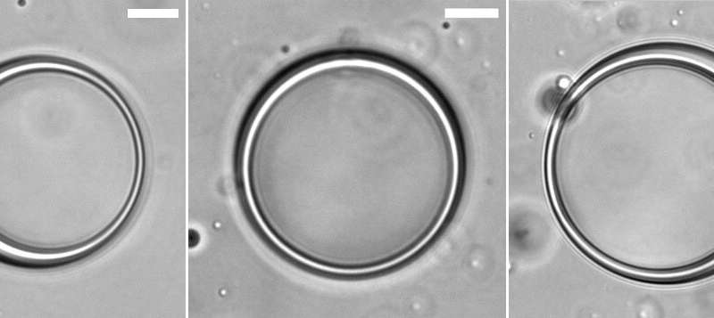 Scientists use protein, RNA to make hollow, spherical sacks called vesicles