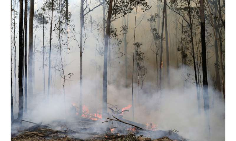As forests burn around the world, drinking water is at risk