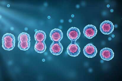Scientists examine the impact of a very specific defect in DNA replication