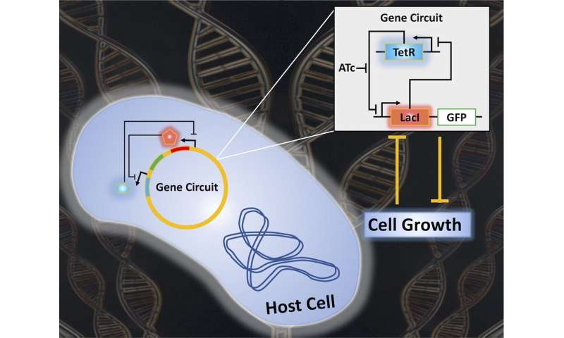 Researchers reveal new understandings of synthetic gene circuits