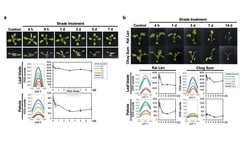 El nuevo descubrimiento de SMART permite la detección temprana del síndrome de evitación de la sombra en