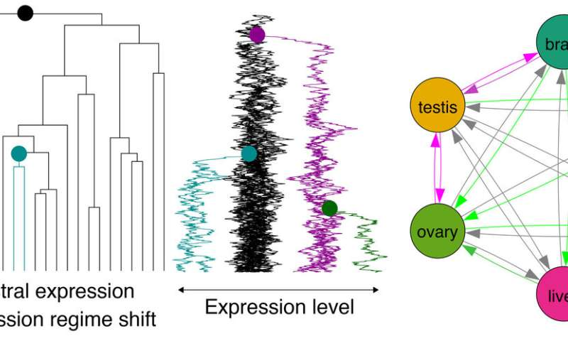 New insights into evolution of gene expression