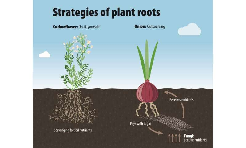 Researchers map law of variations in plant roots