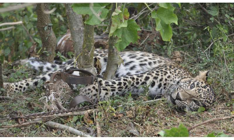 Wildlife Conservation Research - Coronavirus lockdowns increase poaching in Asia, Africa