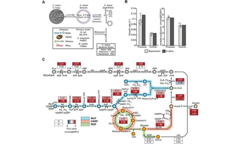 Newly discovered metabolic pathway uses single carbon (C1) gases as a feedstock