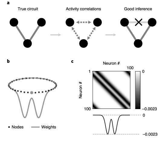 Study unveils that methods to infer the connectivity of neural circuits are affected by systematic errors