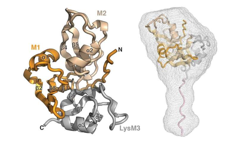 Researchers discover a new and unique class of carbohydrate receptors
