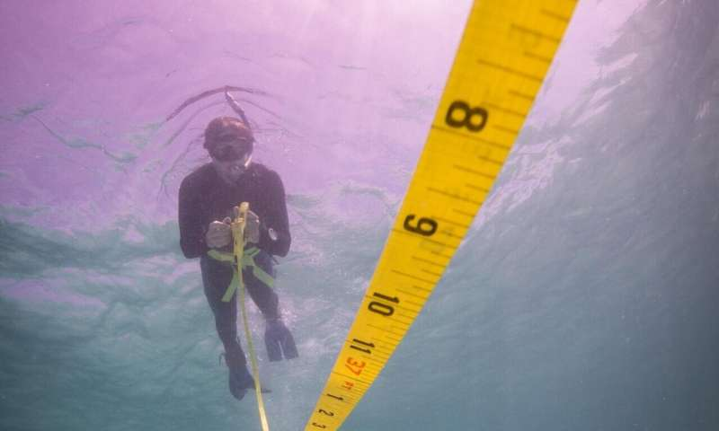 Research reveals fishing pressures affect tropical and temperate reefs differentl