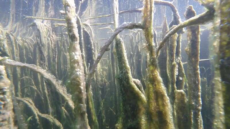 Research shows that submerged vegetation helps to offset Chesapeake Bay acidification