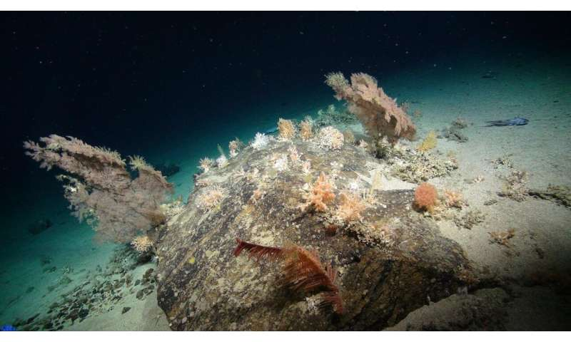 Scientists call for decade of concerted effort to enhance understanding of the deep seas