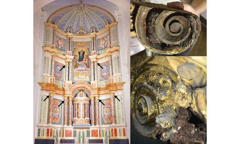 19th-century bee cells in a Panamanian cathedral shed light on human impact on ecosystems