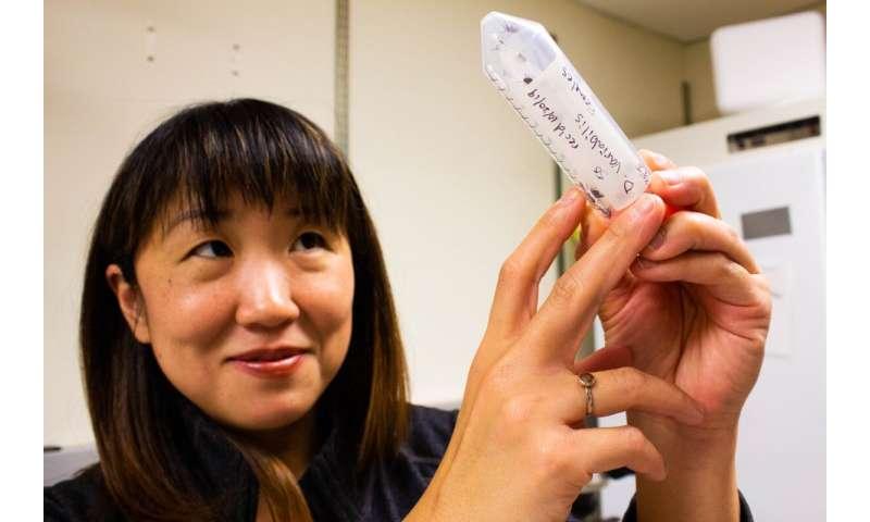Un gen de una bacteria antigua ayuda a las garrapatas a propagar la enfermedad de Lyme
