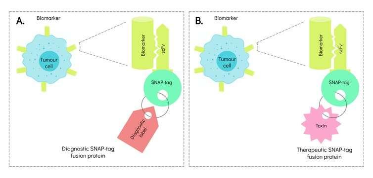Antibody technologies take a step closer to precision medicine