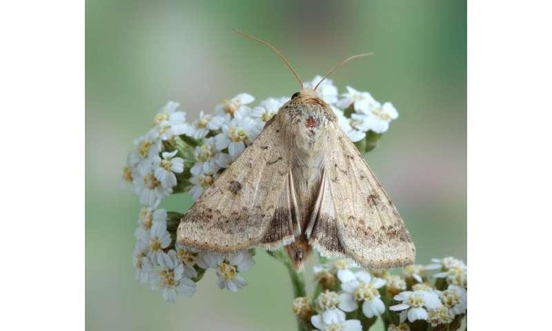 Combatir insectos dañinos al comprender su sentido del olfato