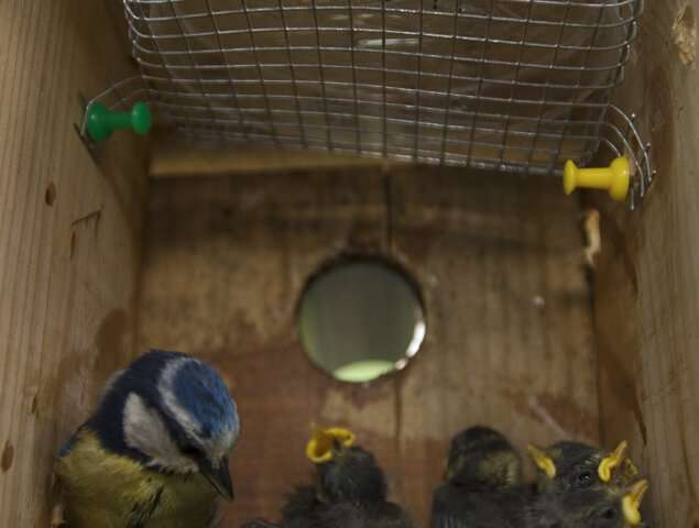 Bird nests attract flying insects and parasites due to higher levels of carbon dioxide