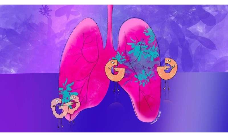 Blocking sugar metabolism slows lung tumour growth
