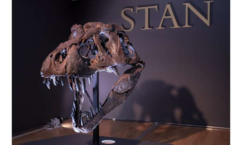 Bones to pick, for $8M: Stan the T rex goes up for auction