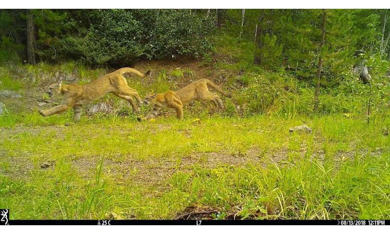 Camera traps show impact of recreational activity on wildlife