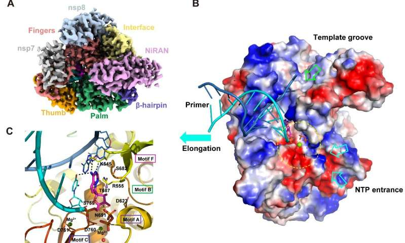 Chinese scientists uncover structural basis for SARS-CoV-2 inhibition by Remdesivir