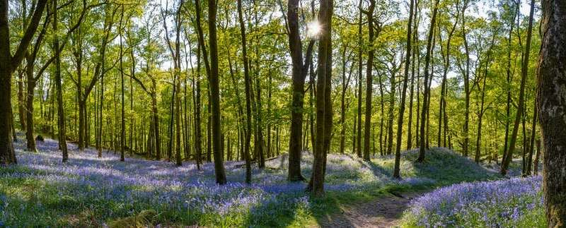 Climate crisis: how to make space for 2 billion trees on a crowded island like the UK