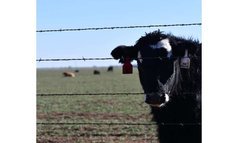 Coronavirus: Human strain causes fear, but domestic livestock strains are routine