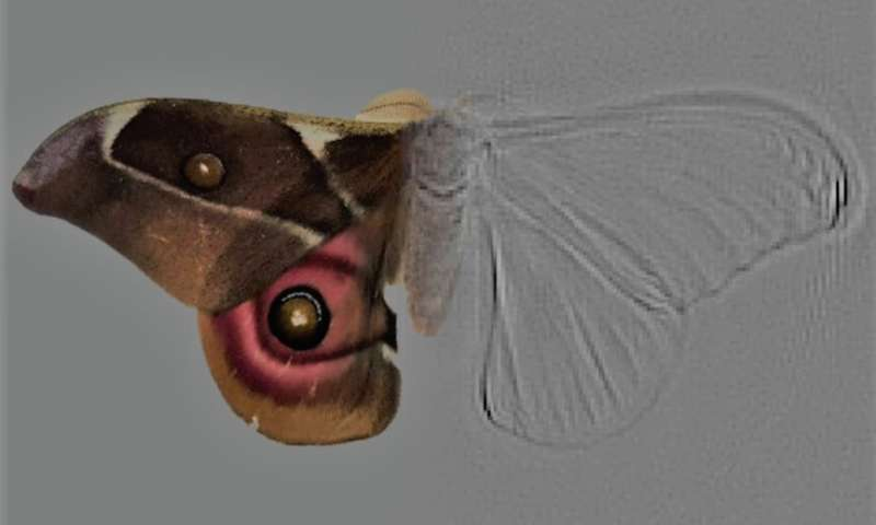 Deaf moths evolved noise-cancelling scales to evade prey