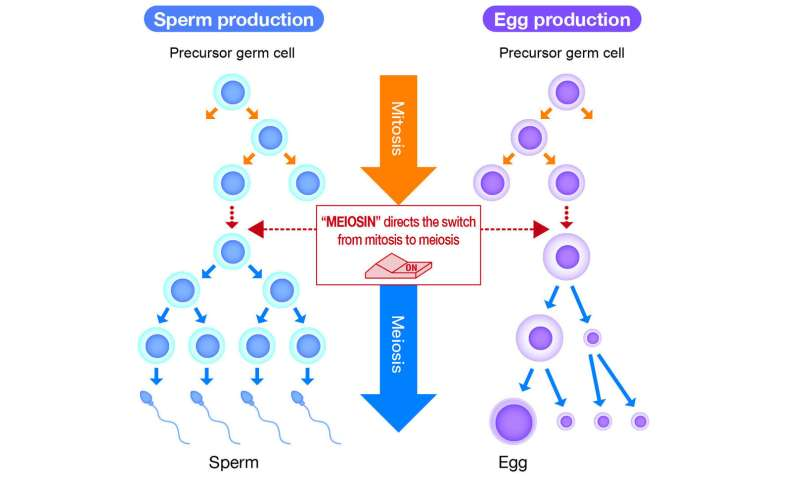 Discovery of genes involved in infertility